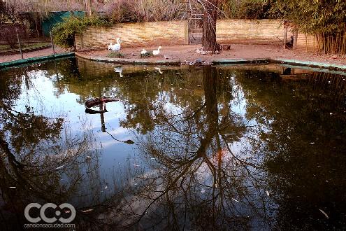 20130802173802-zoologico.jpg