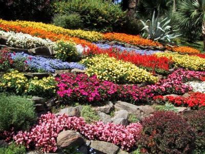 20140304204313-flores-para-jardin.jpg
