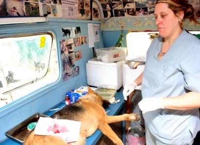 20101216015133-castracion-quirurgica.jpg