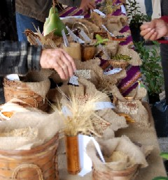 20110613154540-las-semillas-canarias.jpg