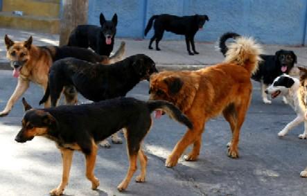 20130910154221-perros-callejeros.jpg